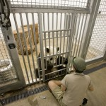 Adelaide Zoo Hogar para Pandas - Hassell - Australia