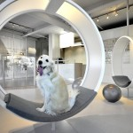 Dog Spa - Square One Interiors - Canadá