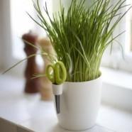 Brussels Herbs – Bas van der Veer – Netherlands