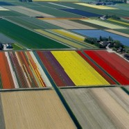 Aerial photos of tulip fields – Bruxelles5 – Netherlands