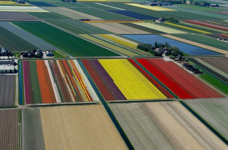 Aerial photos of tulip fields - Bruxelles5 – Netherlands
